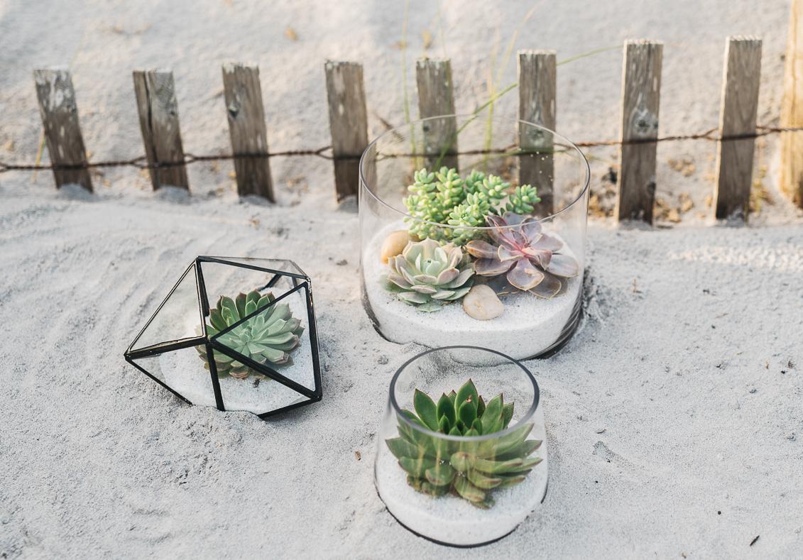 Succulent - Nest Realty