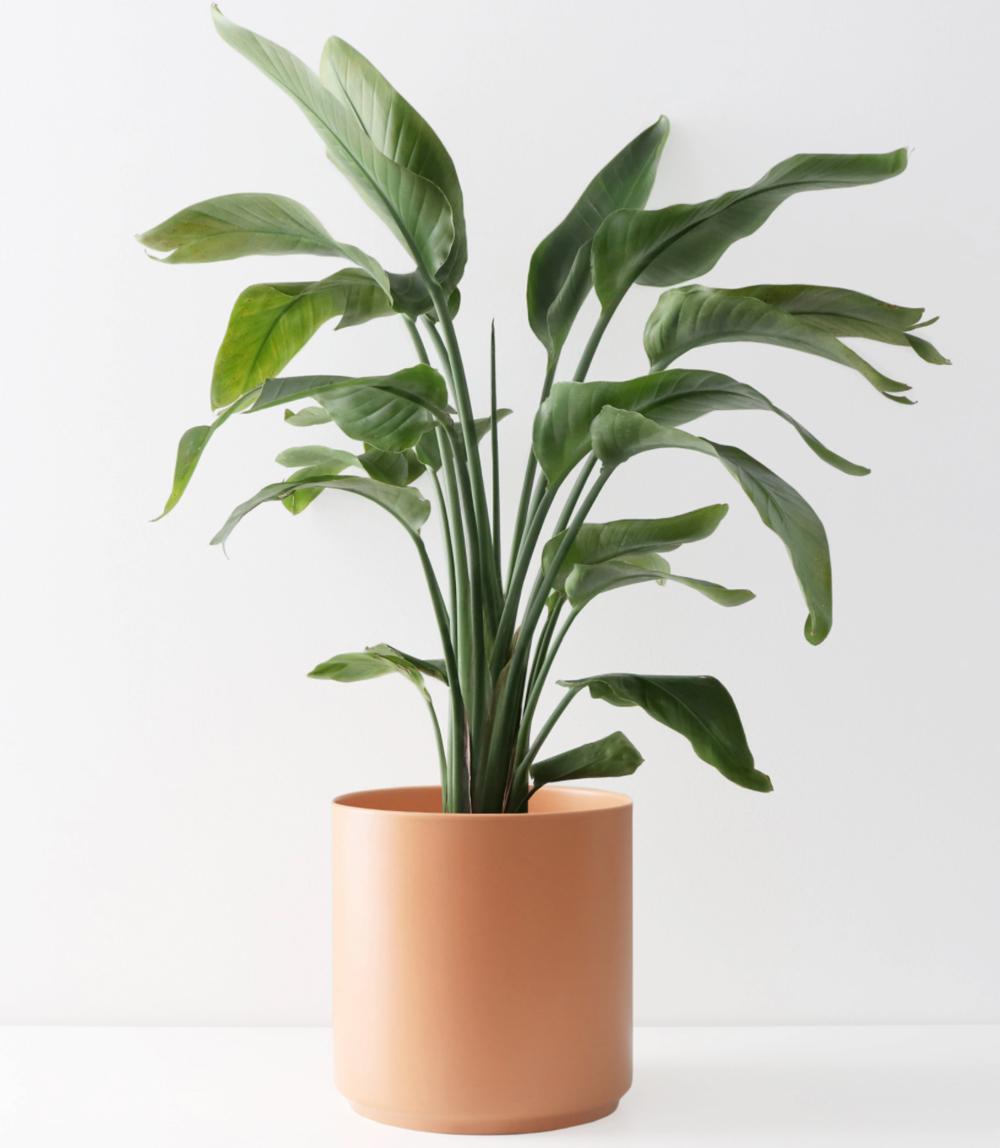 outdoor oasis - planter